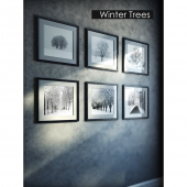 Pictures - Winter forest
