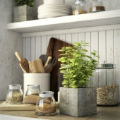 Kitchen set with a plant