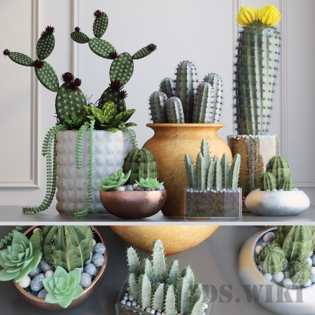Set with Cactuses