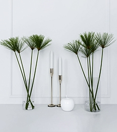 Shoots of papyrus in a glass vase