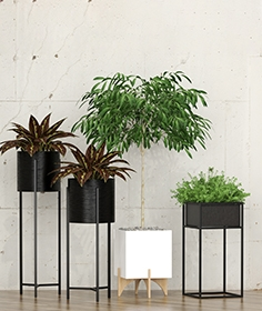 Potted plants 10