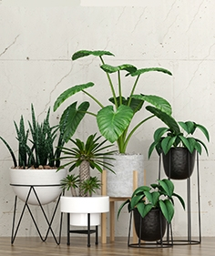 Potted plants 092