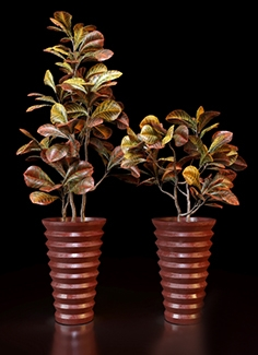 Red Croton