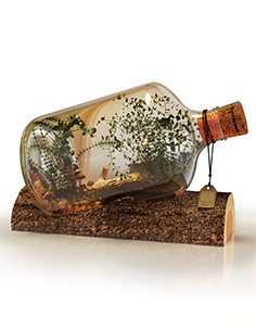 Terrarium decorative object 01