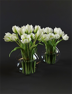 White and green tulips 102