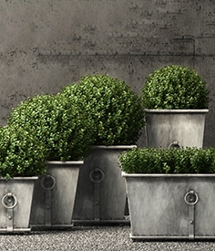 Restoration Hardware plants 02