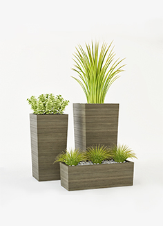 Crate & Barrel plants