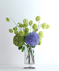 Hydrangeas and viburnum 77