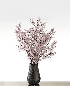 Bouquet of sakura in a vase