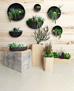 Plants on wall 3