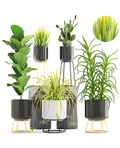 Plants set West Elm