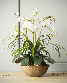 Orchids with willow branches 02