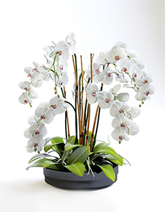 Orchids with willow branches 03